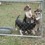 houndpuppies 003